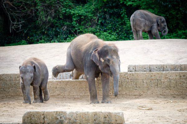 Elefantenbabies
