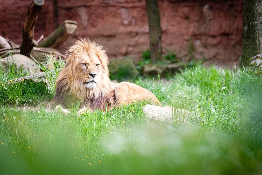 Fotoexpedition im Erlebnis-Zoo